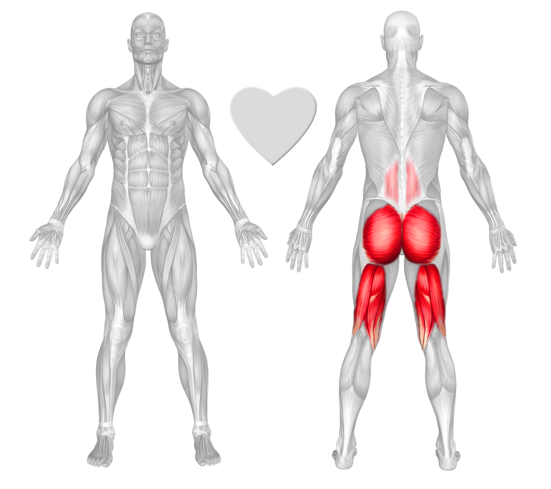 Buttocks Exercises & Workouts - FreeTrainers.com