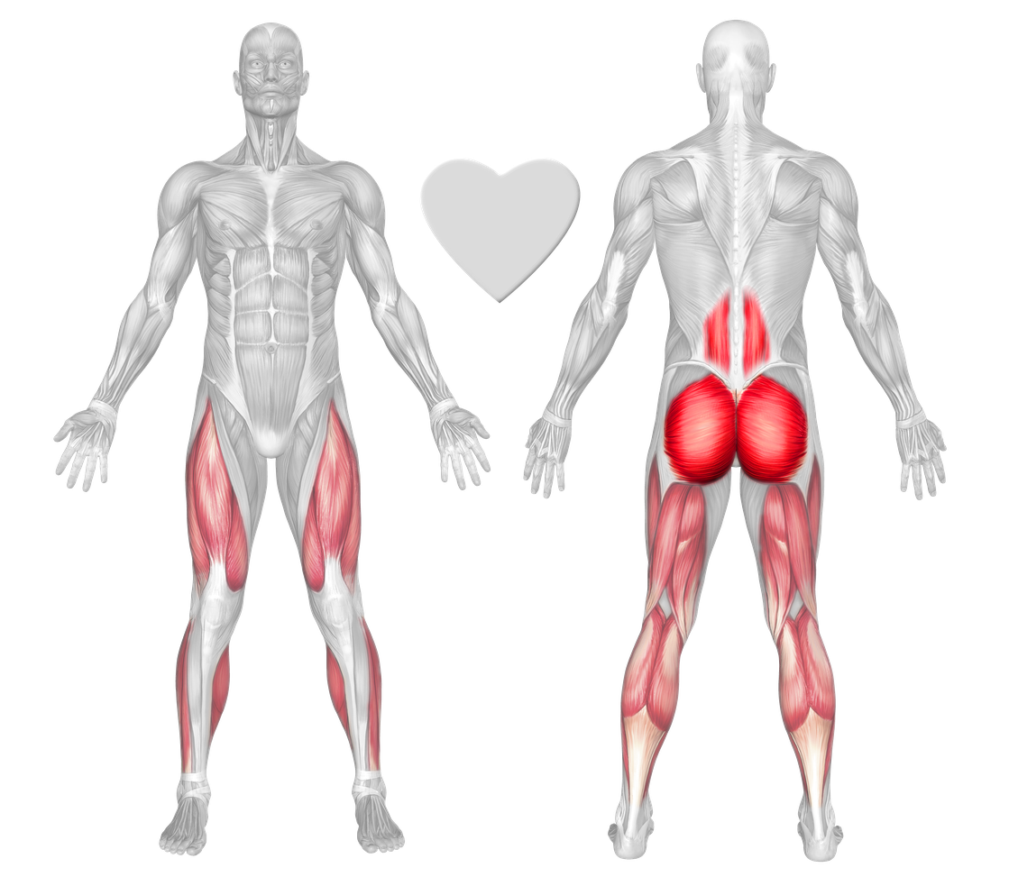 Gluteus maximus Exercises & Workouts - FreeTrainers.com