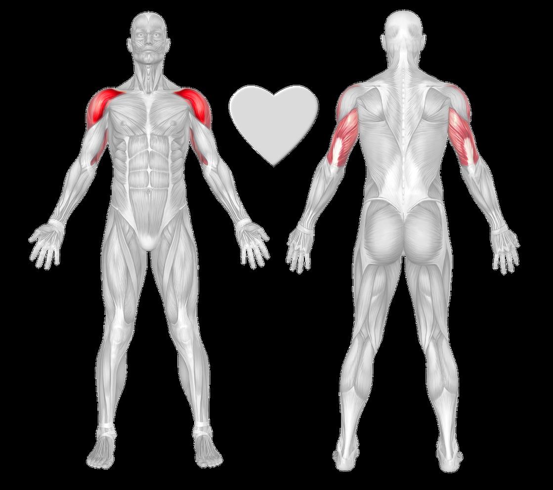Shoulders Exercises Workouts Freetrainers