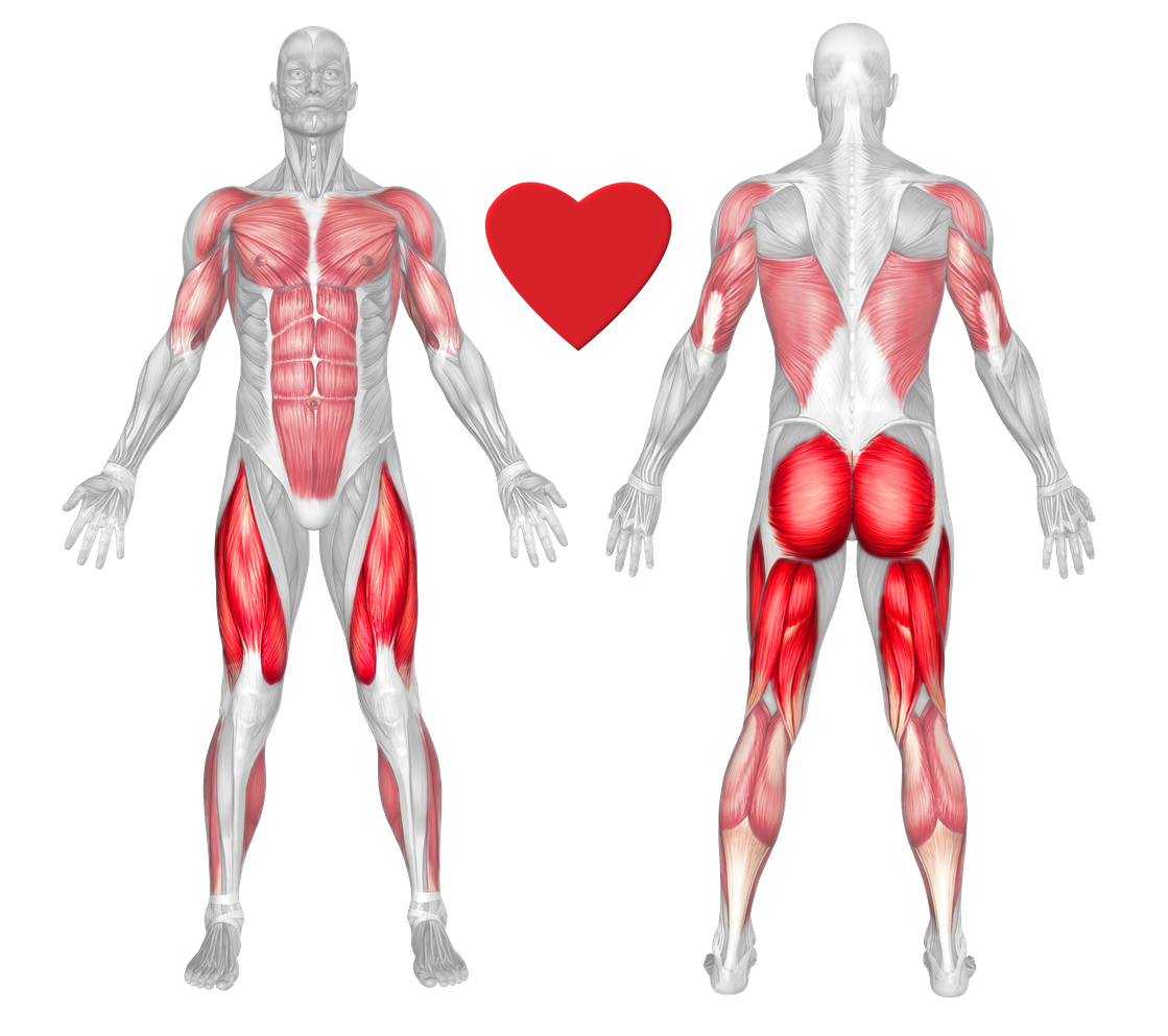 Gluteus Maximus Exercises & Workouts