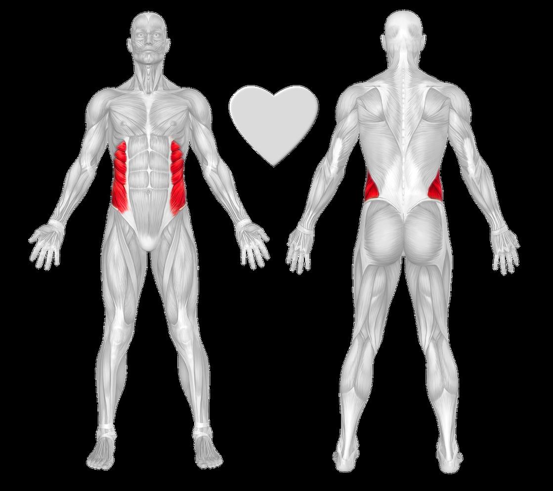 Obliques Exercises & Workouts - FreeTrainers.com